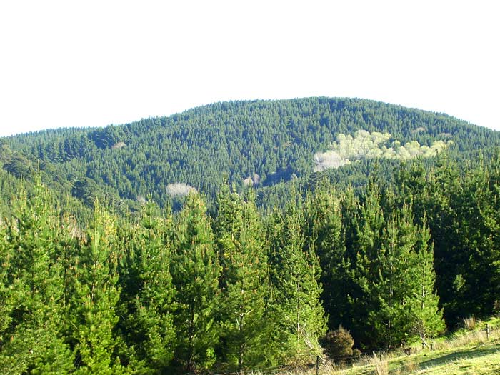 Forestlands New Zealand Ltd  - Forestry and land investments in New Zealand